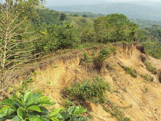 El deslizamiento en El Tobo amenaza con llevarse los cultivos de café.