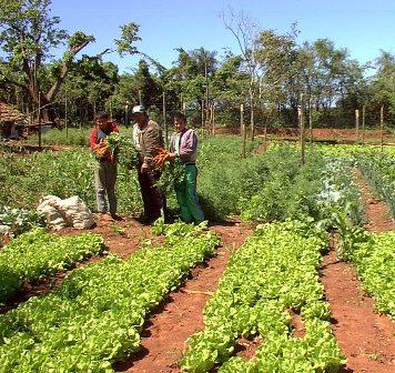 De 1'334.222 hectáreas que fueron utilizadas el año pasado en el Huila para la agricultura, 21.343 hectáreas fueron para uso agrícola