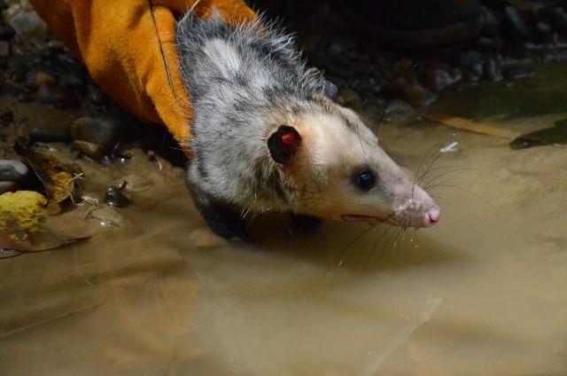 Así fueron liberados 88 animales en vía de extinción en el Huila 1 5 julio, 2020