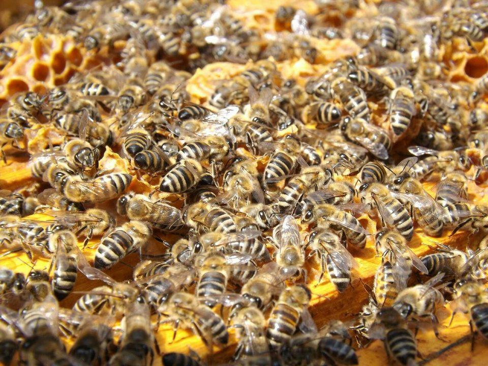 Estudiantes de la Nacional atacados por abejas en Aipe 1 14 agosto, 2020