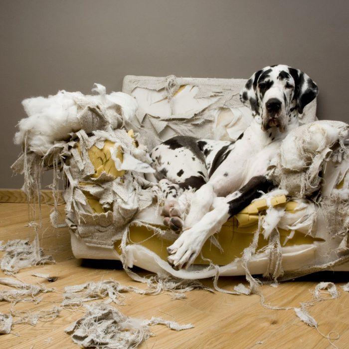 Controle la hiperactividad canina 1 7 abril, 2020