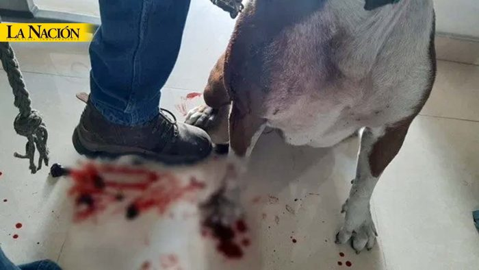 Un perro fue atacado por los ladrones 1 13 agosto, 2020