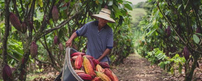 Campesinos urgen medidas para garantizar abastecimiento 1 30 marzo, 2020