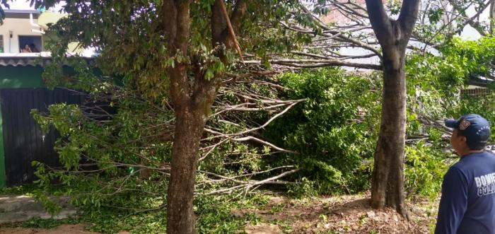 Masiva caída de árboles por fuertes vientos en Neiva 1 27 mayo, 2020