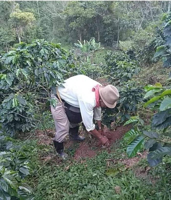 Campesinos se preparan para recolectar café en familia y con mingas 1 27 mayo, 2020