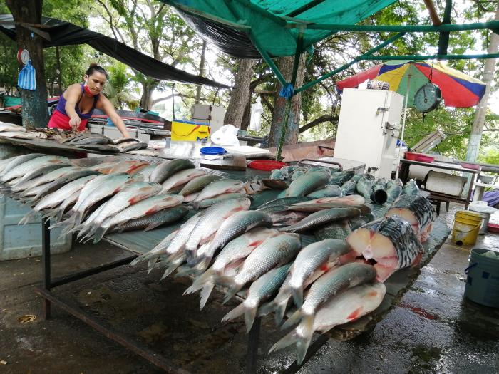 Así están los precios del pescado en Neiva 1 27 mayo, 2020