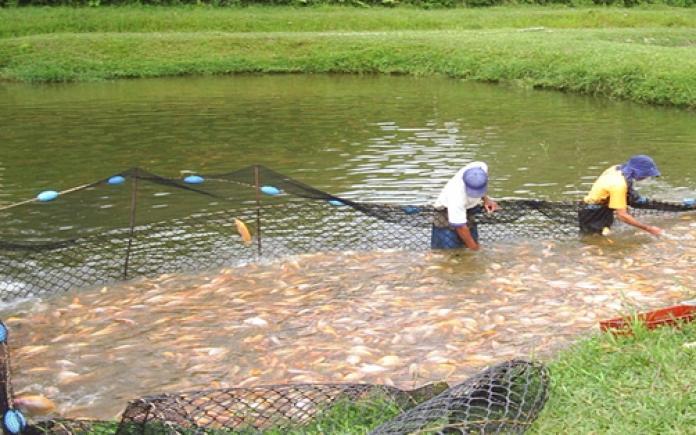 Incertidumbre en el sector piscícola 1 2 julio, 2020