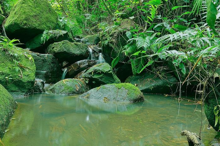 En el Día de la Biodiversidad, disfrute este recorrido virtual por la ecoreserva La Tribuna 1 27 mayo, 2020