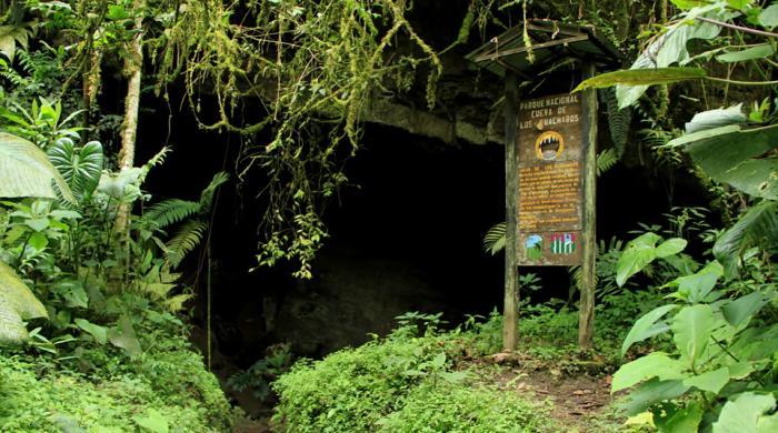 Cueva de los Guácharos, 60 años 9 11 noviembre, 2020