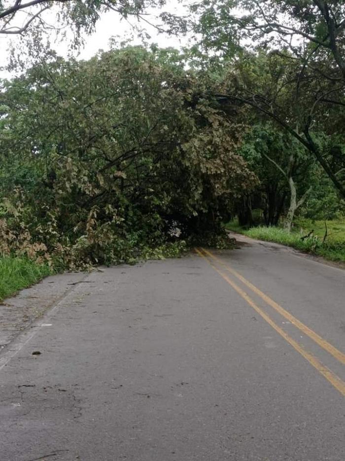 Árboles caídos en la vía Neiva-Campoalegre 10 8 mayo, 2021