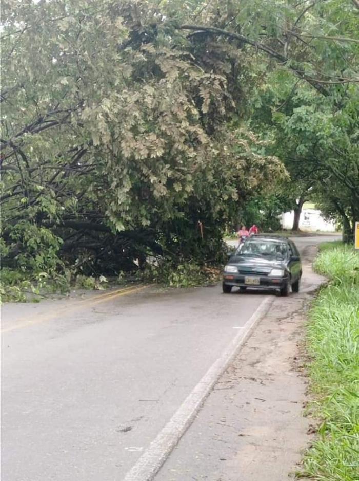 Árboles caídos en la vía Neiva-Campoalegre 9 8 mayo, 2021
