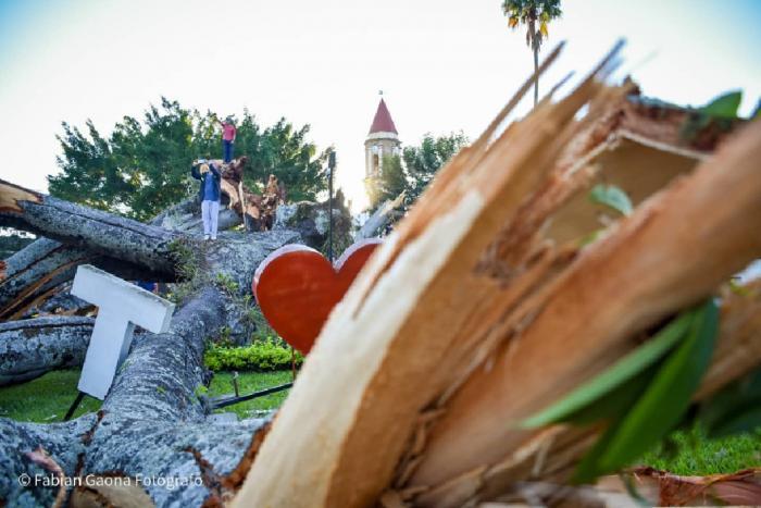 Adiós a la centenaria 'Ceiba de la Libertad' 7 22 mayo, 2021